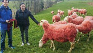 Rote Rüben zum Fressen färbt die Wolle auf natürliche Weise. Sehen Sie selbst... ;) (c) Modehaus Kutsam