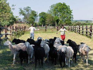 Tiere dürfen natürlich auf einem Bauernhof nicht fehlen. (c) Obenauf in Unternalb