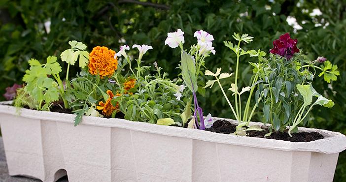 urban gardening gem segarten am eigenen balkon. Black Bedroom Furniture Sets. Home Design Ideas